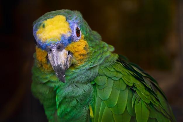 Lindo papagaio verde close-up