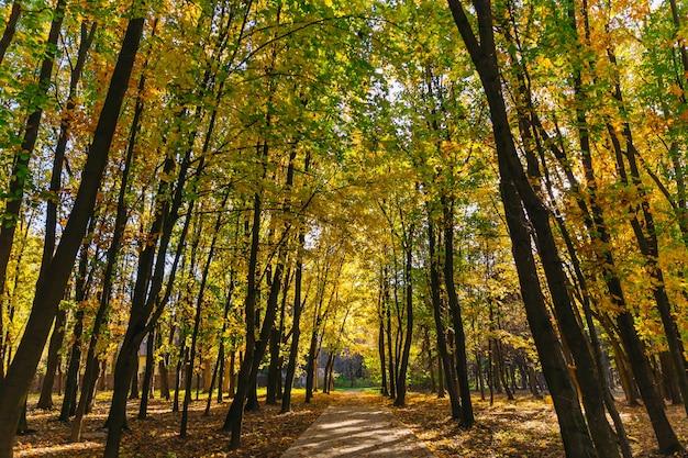 Lindo parque de outono com clima ensolarado. árvores com folhas multicoloridas na grama do parque
