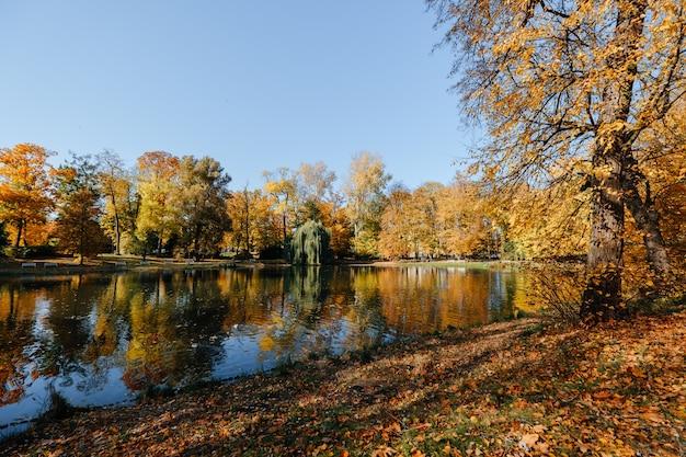 Lindo parque de outono com lago e sol