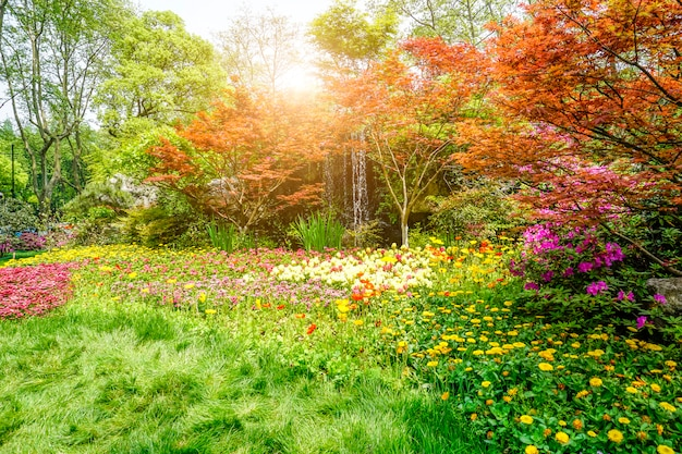 Lindo parque verde
