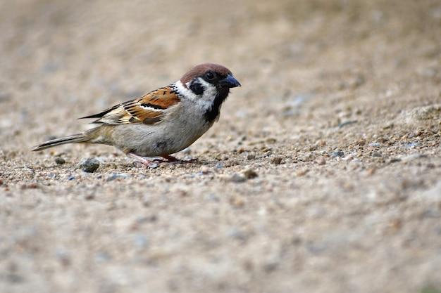 Lindo passarinho selvagem na natureza