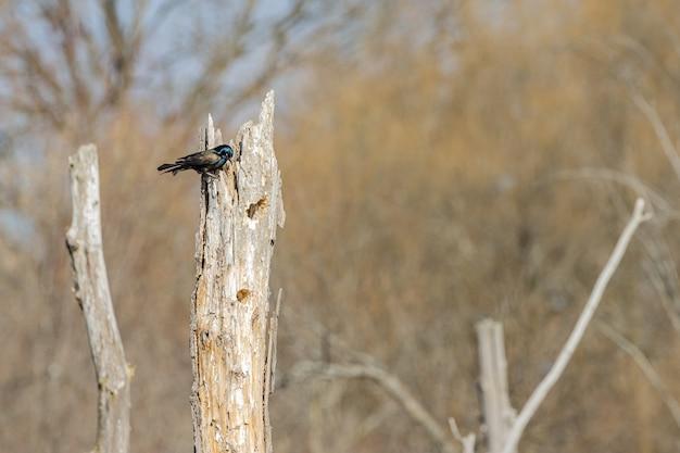 Lindo pássaro em pé em uma árvore
