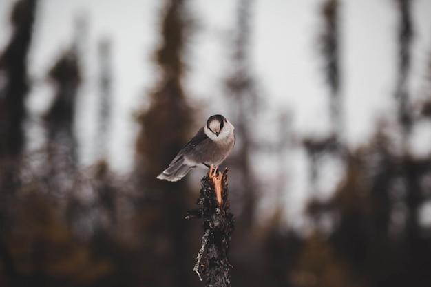 Lindo pássaro marrom em uma árvore