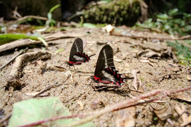 Lindo pássaro marrom na floresta e nas árvores