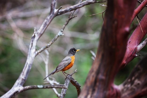 Lindo pássaro na floresta