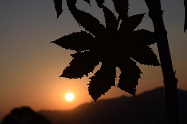 Lindo pôr do sol com silhueta de folhas de manona