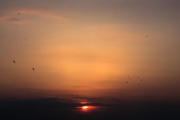 Lindo pôr do sol contra o qual os pássaros voam