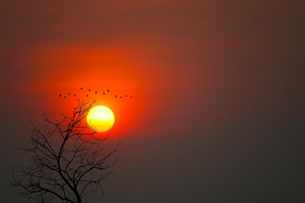 Lindo pôr do sol na silhueta de pássaros voando e árvores secas no fundo do céu vermelho escuro