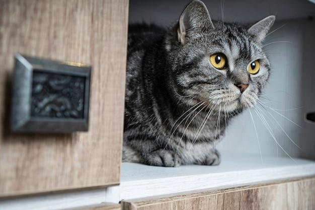 Lindo retrato de gato sentado em um armário