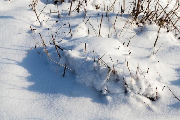 Lindos fenômenos naturais da temporada de inverno, cobertos por uma espessa camada de neve após um ciclone com tempestades e nevascas, clima de inverno frio e gélido, montes de neve