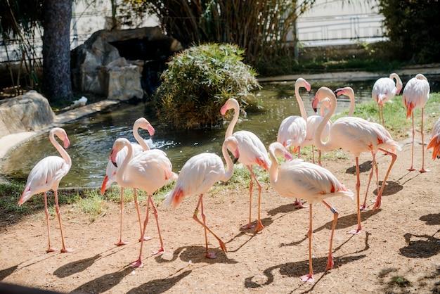 Lindos flamingos na natureza.