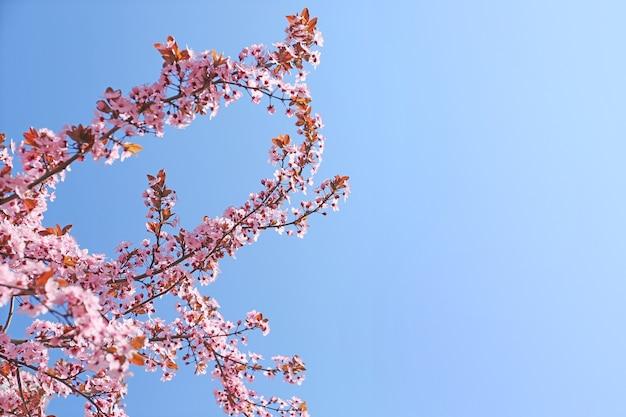 Lindos galhos de árvores florescendo na superfície do céu