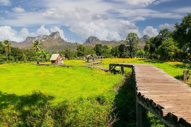 Lindos girassóis em campo de primavera na província de lopburi, tailândia