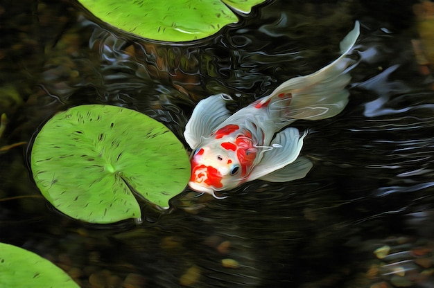 Lindos peixes koi japoneses