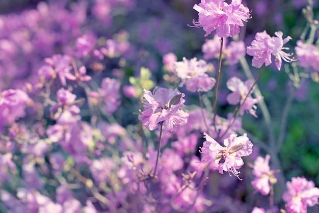 Lindos ramos com flores alecrim no fundo do céu desfocagem