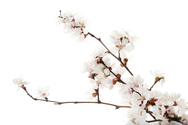 Lindos ramos floridos em branco