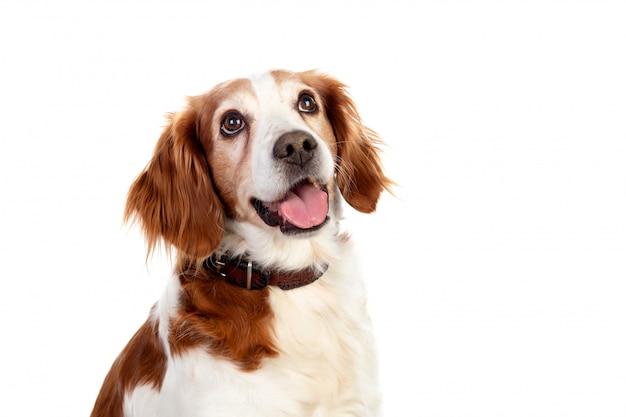 Lindos retratos de um cachorro