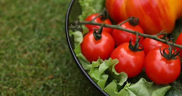 Lindos tomates vermelhos suculentos.