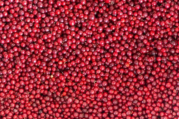 Lingonberries naturais vermelhos maduros, fundo e textura