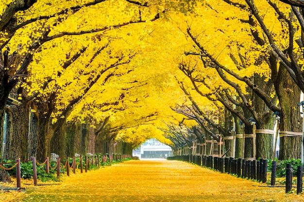 Linha de árvore de ginkgo amarelo no outono. parque de outono em tóquio, japão.