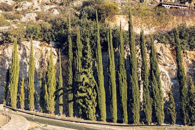 Linha de ciprestes e estrada em uma paisagem rural, europa.