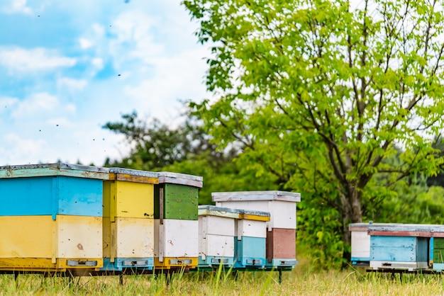 Linha de colméias coloridas de madeira para abelhas perto da árvore.