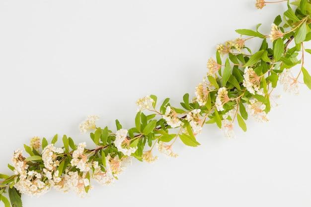 Linha de flores e folhas de vista superior