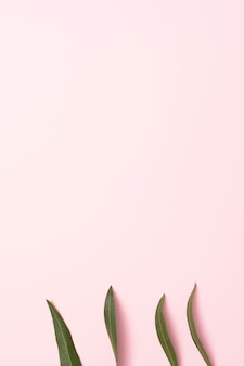 Linha de folhas verdes em fundo rosa