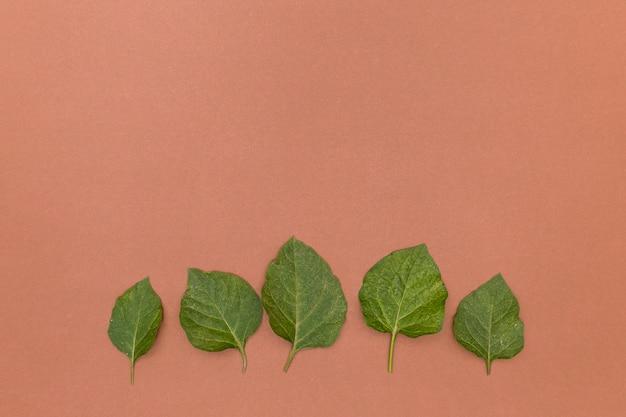 Linha de folhas verdes na superfície do espaço de cópia