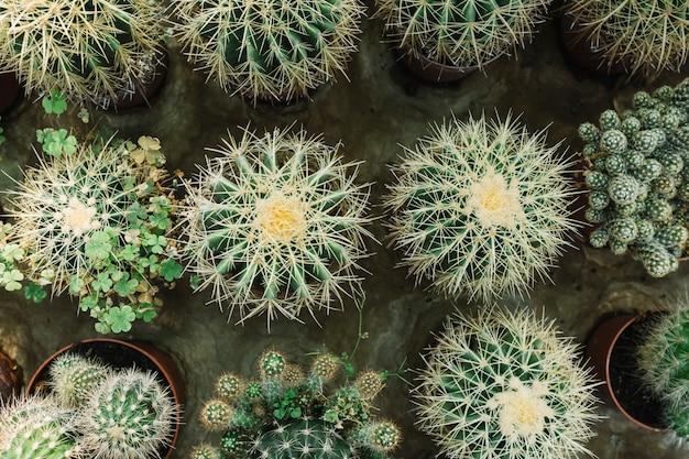 Linha de plantas suculentas cravadas