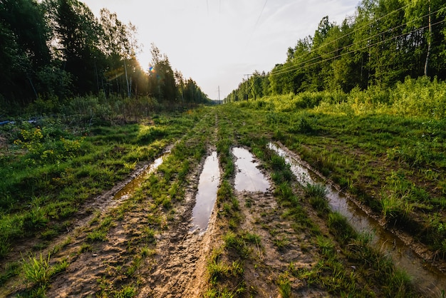 Linha de transmissão de energia de alta tensão na floresta no verão