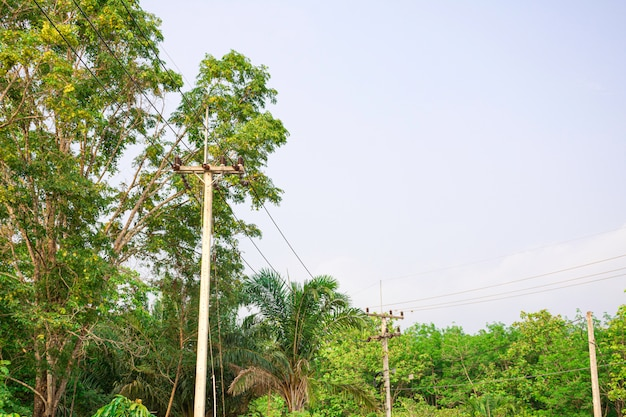 Linha de transmissão de energia elétrica na natureza