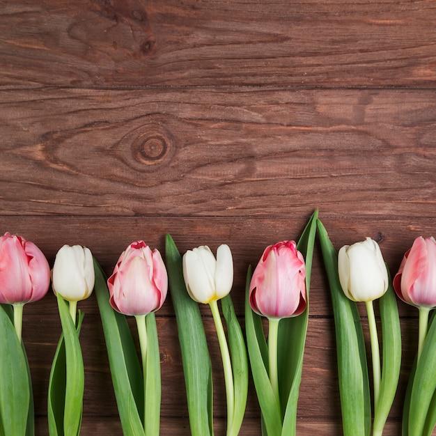 Linha de tulipas no cenário texturizado de madeira