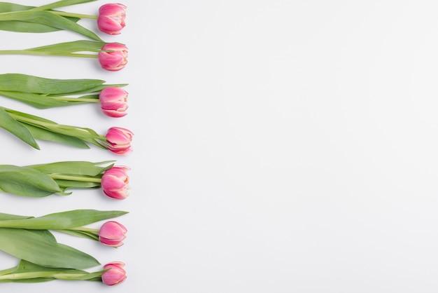 Linha de tulipas