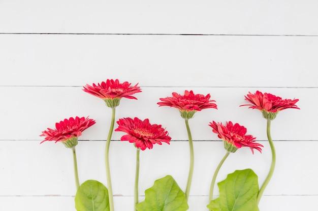 Linha de vista superior flores sobre fundo de madeira