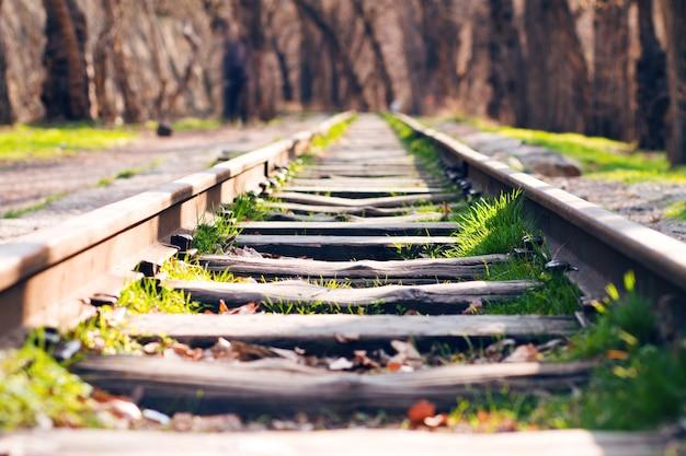 Linha férrea na floresta