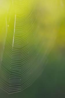 Linhas da web textura de fundo