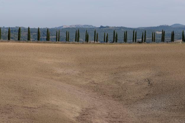 Linhas de árvores de cipreste e espaço de cópia com céu azul, toscana, itália, europa.