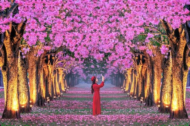 Linhas de belas árvores de flores cor de rosa.