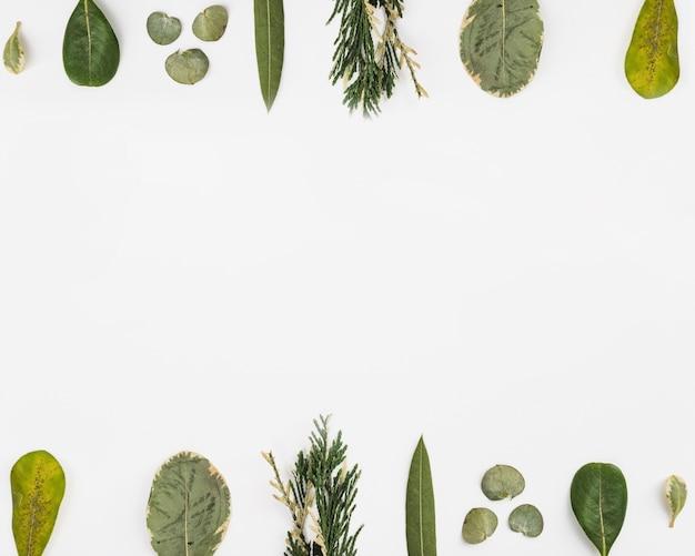 Linhas de folhas exóticas