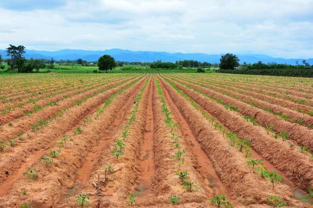 Linhas de solo feitas por tratores tem céu azul e montanha