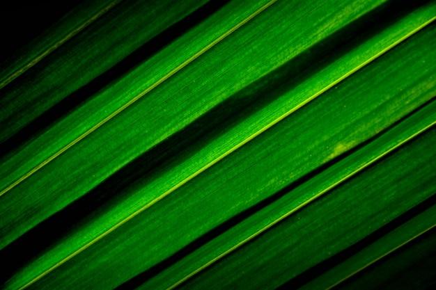 Linhas e texturas de folhas de coco de palma verde