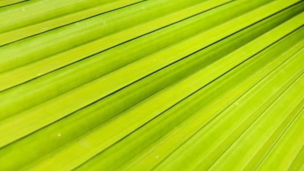 Linhas e texturas de folhas de palmeira verde