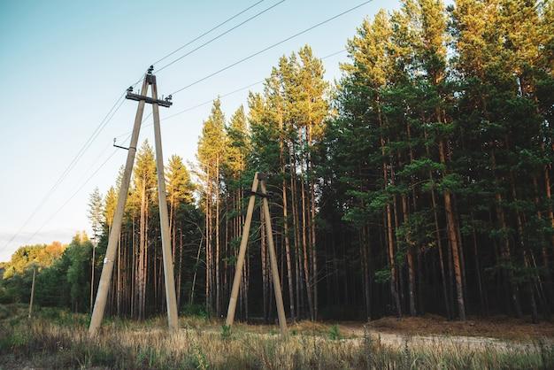 Linhas elétricas no glade ao longo das árvores das coníferas na luz solar.