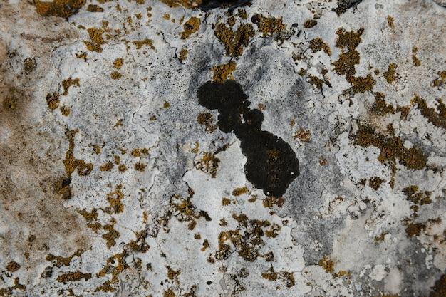 Líquen e musgo na rocha velha