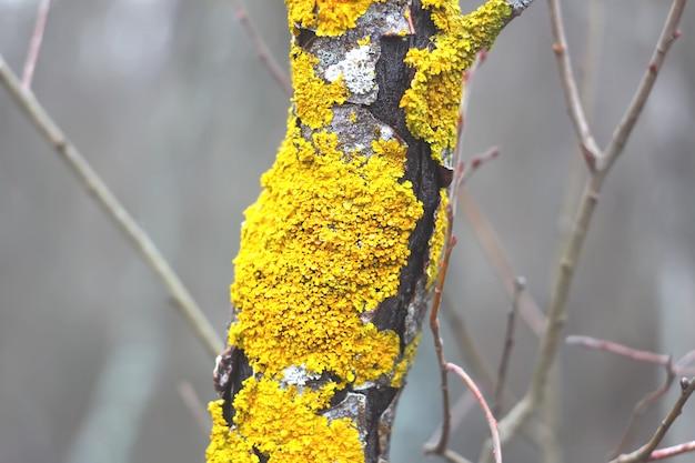 Líquen em galho de árvore em floresta selvagem