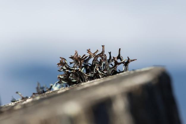Líquenes em madeira seca com umidade na natureza