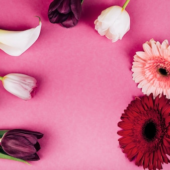 Lírio arum branco delicado; tulipas; gerbera flores sobre fundo rosa