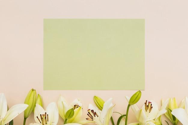 Lírios amarelos e papel verde
