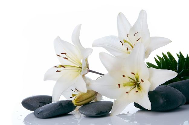 Lírios de madonna com pedra spa em fundo branco